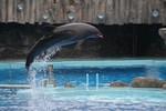 dolphin01.jpg